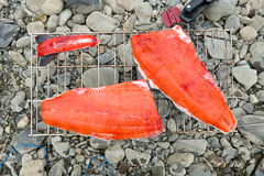 Freshly caught salmon fillets on a portable grill. Resting on stony ground waiting to be cooked on a fishing trip Royalty Free Stock Image