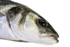 Freshly caught Sea Bass Stock Photography