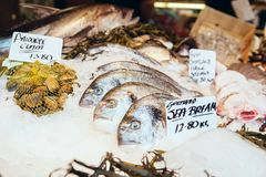 Freshly caught Sea Bream fishes and other seafood stock photography