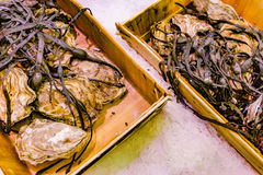 Freshly caught sea fish. Seafood on ice at the fish market. Close up fish Royalty Free Stock Photo