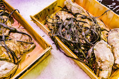 Freshly caught sea fish. Seafood on ice at the fish market. Close up fish Stock Image