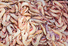 Freshly caught shrimp Stock Photos