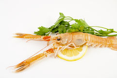 Freshly caught shrimp with lemon Stock Images