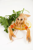 Freshly caught shrimp with lemon Stock Image