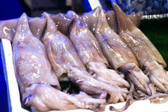 Freshly caught squid for sale Royalty Free Stock Photos