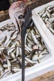 Freshly caught swordfish on sale. Large swordfish on top of styrofoam boxes of freshly caught fish on a fishermen boat in Zakynthos Port, Zakynthos City, Ionian royalty free stock photo