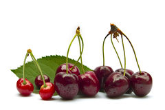 Freshly cherries Royalty Free Stock Images