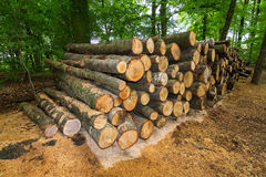 Freshly chopped logs. Big pile of freshly chopped logs in the forest in the Netherlands stock photography