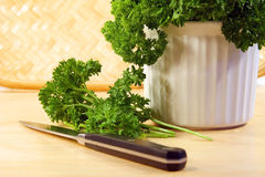 Freshly chopped parsley. Cutting freshly chopped parsley stock images