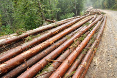 Freshly chopped tree logs Stock Photography