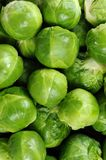 Brussels sprouts. Stock Photos
