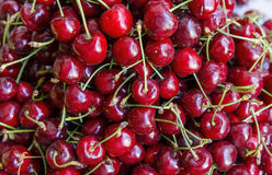 Freshly collected cherries Royalty Free Stock Photos
