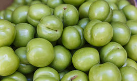 Freshly collected green plums Stock Images
