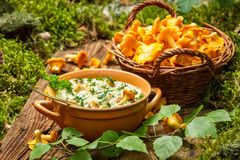 Freshly collected mushrooms in the woods and cooked with cream Stock Images