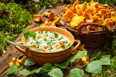 Freshly collected mushrooms in the woods and cooked with cream Stock Photo