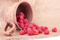 Freshly collected raspberries Royalty Free Stock Photography