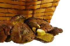 Freshly collected wild mushrooms and basket Royalty Free Stock Photo