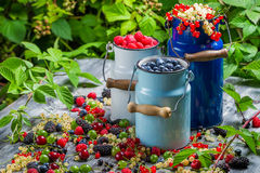 Freshly collecting wild berry fruits Stock Photos