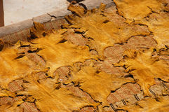 Freshly colored animal leathers are drying on sun Royalty Free Stock Photo