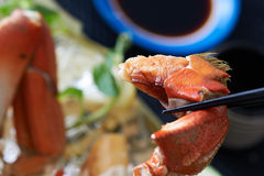 Freshly cooked crab. Claw being eaten with chopsticks Stock Image