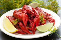 Freshly Cooked Crayfish Stock Photo
