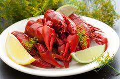 Freshly Cooked Crayfish. Freshly cooked Swedish crayfish Stock Photo
