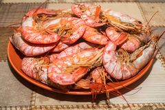 Freshly cooked langoustines on plate. Close up boiled langoustines on plate healthy seafood concept Stock Photos