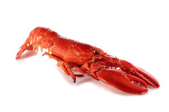Freshly cooked lobster Stock Photos