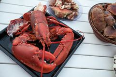 Freshly cooked lobster lying on baking tray Stock Photo