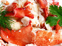Freshly cooked lobster. Freshly cooked Nova Scotia lobster meat with garden fresh dill and parsley Royalty Free Stock Photos