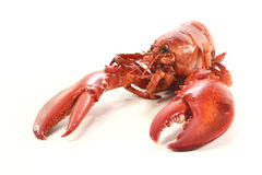 Freshly cooked lobster Royalty Free Stock Images