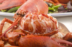 Freshly cooked lobster on a wooden board Royalty Free Stock Photography