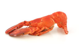 Freshly cooked Maine lobster Royalty Free Stock Photography