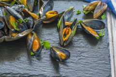 Freshly cooked mussels Royalty Free Stock Images