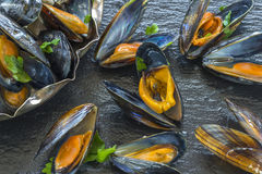 Freshly cooked mussels Stock Images