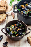 Freshly cooked mussels at home Royalty Free Stock Photo
