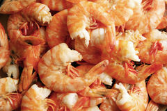 Freshly cooked peeled prawns Royalty Free Stock Photo