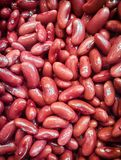 Freshly Cooked Red Beans Prepared for a Salad. Freshly Cooked Red Beans Prepared for a Salad royalty free stock photos