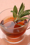 Freshly cooked sage tea Royalty Free Stock Photography