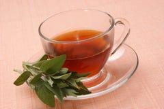Freshly cooked sage tea Royalty Free Stock Image