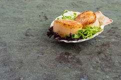 Freshly cooked scallops on a shell Stock Photography