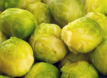 Freshly cooked sprouts Stock Image