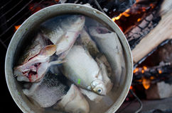 Freshly cought fish cooking in a big pot on open fire. Pieces of fish are shown close-up. Some fish put in pan entirely. Burning wood on the background Stock Photography
