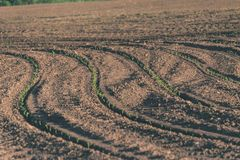 Freshly cultivated agriculture fields ready for growing - vintage retro look. Freshly cultivated agriculture fields ready for growing food - vintage retro look stock photography