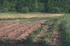 Freshly cultivated agriculture fields ready for growing - vintage retro look. Freshly cultivated agriculture fields ready for growing food - vintage retro look stock image