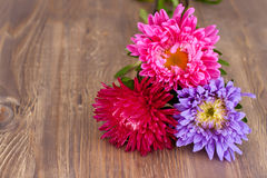 Freshly cut asters stock images