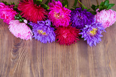Freshly cut asters Royalty Free Stock Photos