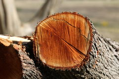 Freshly Cut Cedar Wood Stock Images