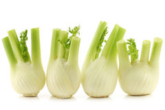 Freshly cut fennel Royalty Free Stock Photography