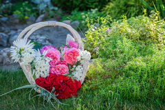 Freshly cut flowers in basket in summer garden Royalty Free Stock Images